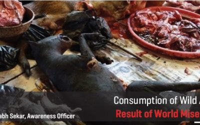 Consumption of Wild Animals: Result of World Misery Today
